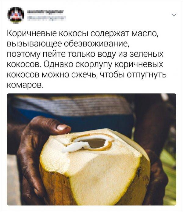 твит про кокосы