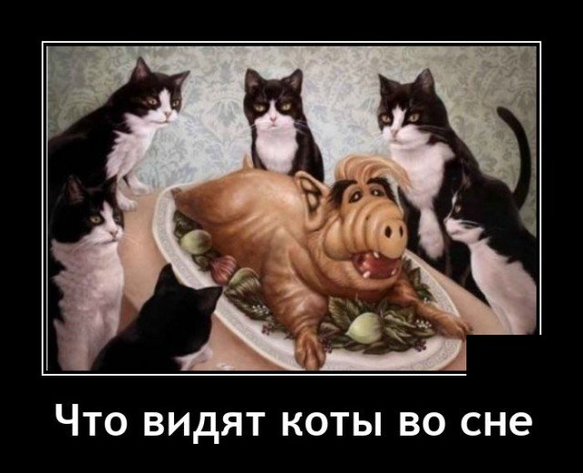 204082_10_trinixy_ru.jpg