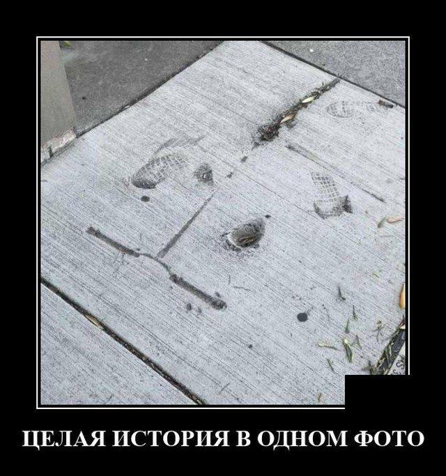204082_19_trinixy_ru.jpg
