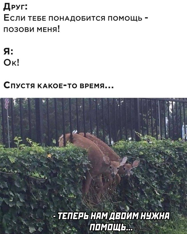 204090_16_trinixy_ru.jpg