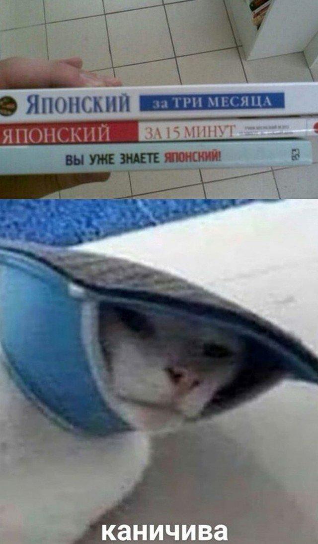 204090_18_trinixy_ru.jpg
