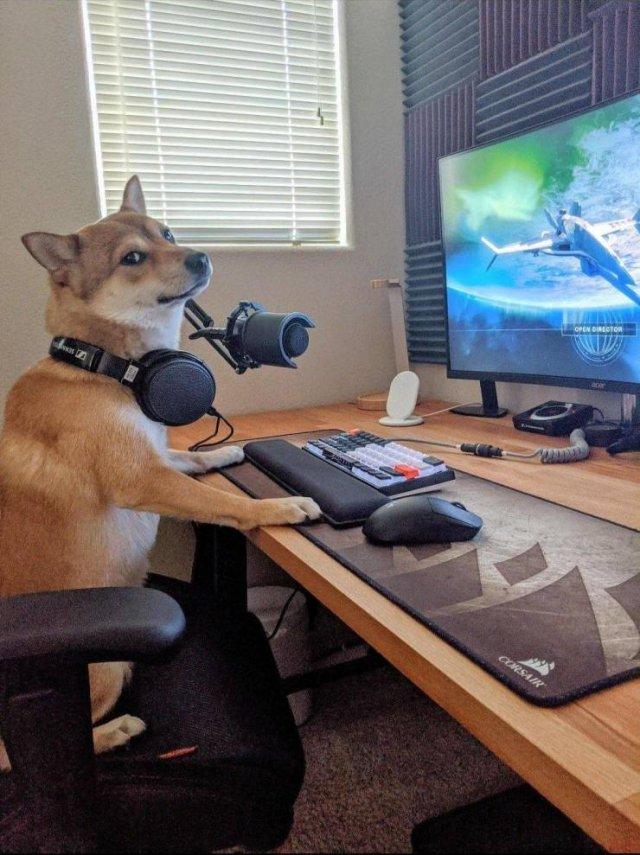 Собака-геймер