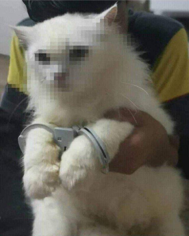 Арестованный котик
