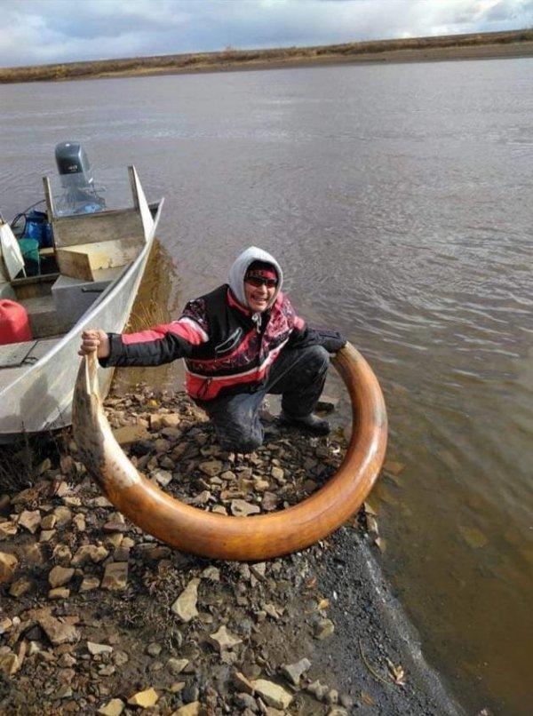 Бивень мамонта, найденный в Арктике