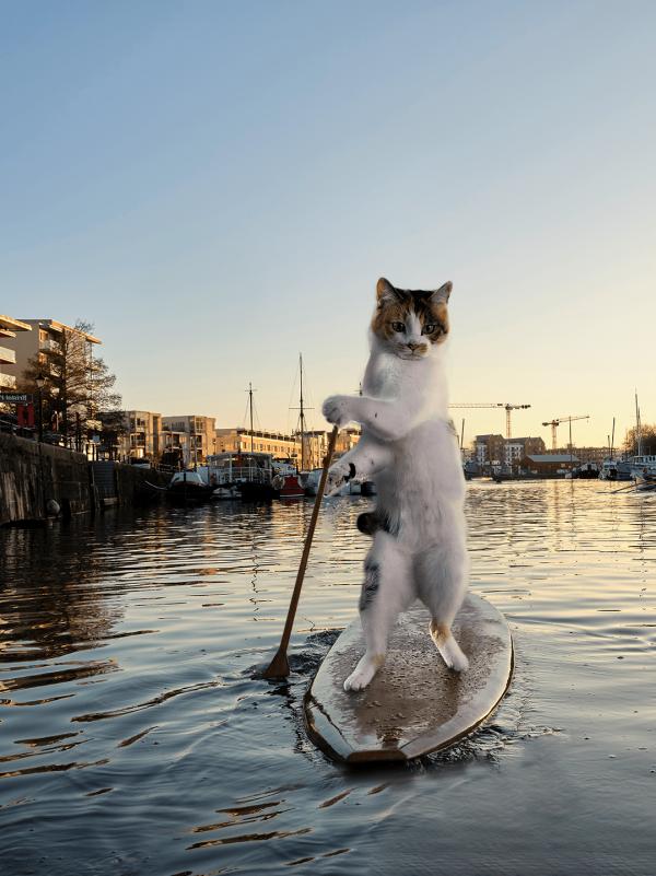 Кошачий сапсёрфинг