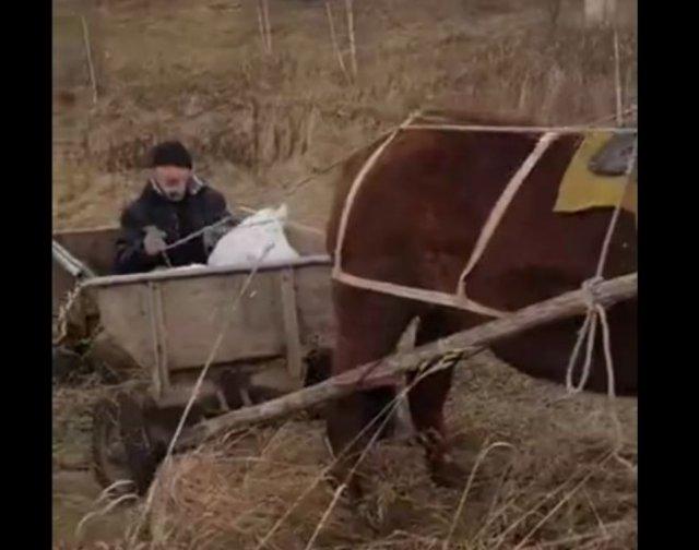 Эпичное и очень громкое спасение лошади от бродячих собак
