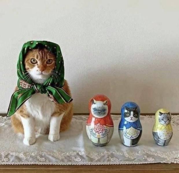 Кот и матрешки