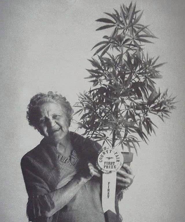 Счастливая бабушка с лучшей марихуаной в округе, Калифорния Сити, 1973 год.