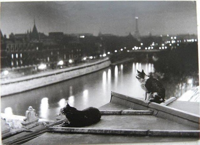 Коты на крыше дома. Париж, 1954 год.
