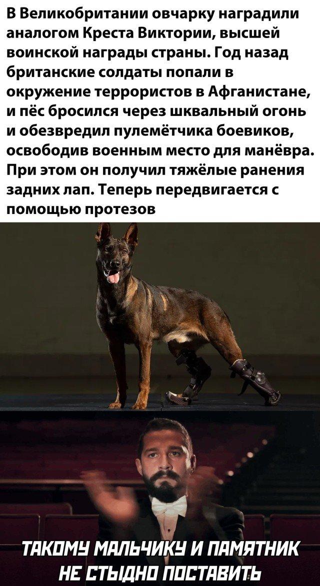 Собака, получившая награду