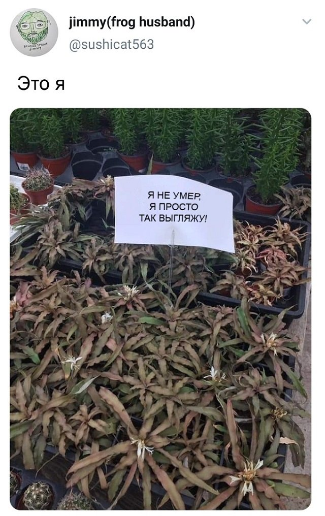 твит про растения
