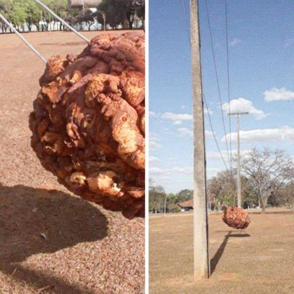 арт-объект, расположенный в одном из бразильских университетов