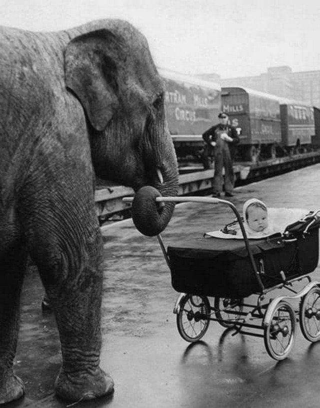 Слон Кама гуляет с дочкой цирковой укpотительницы, 1958 год.