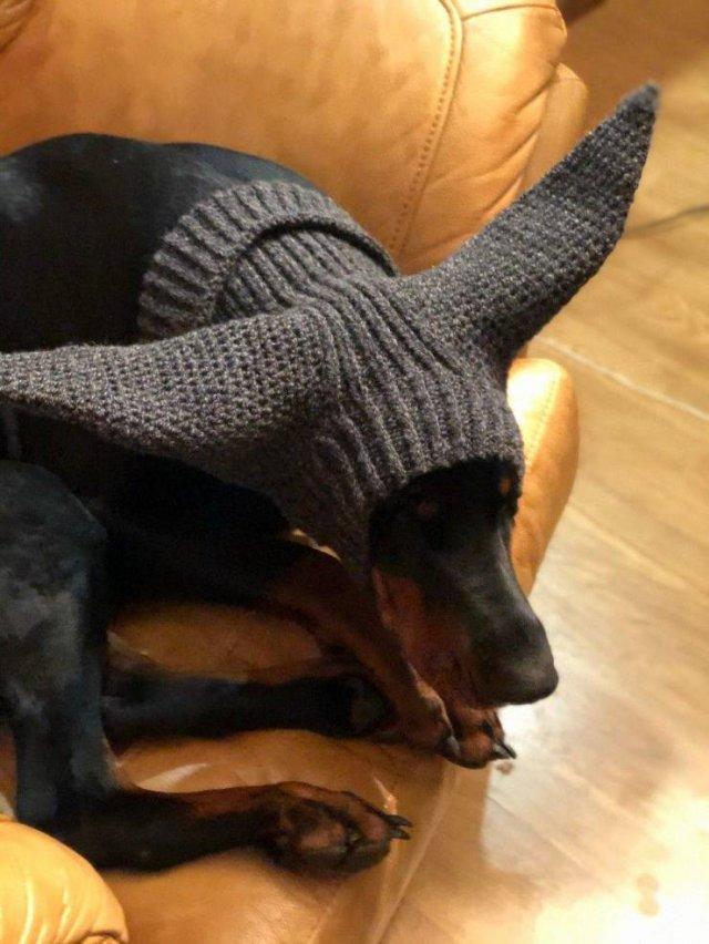 Вязанная шапка для собаки