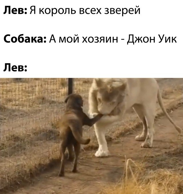 Лев и собака