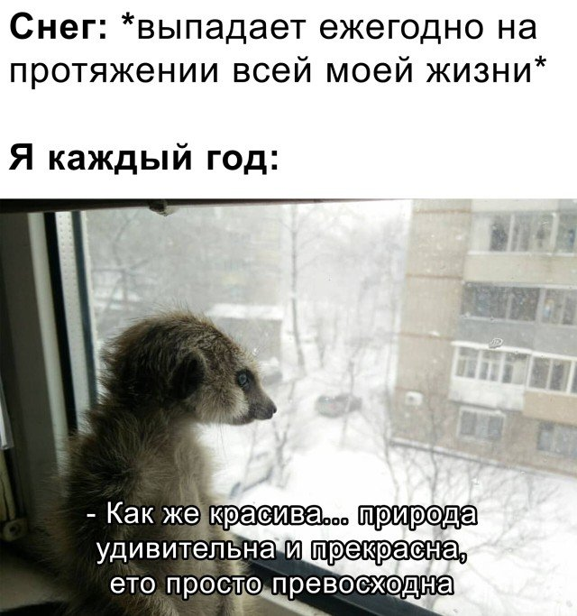 Снег выпадает каждый год