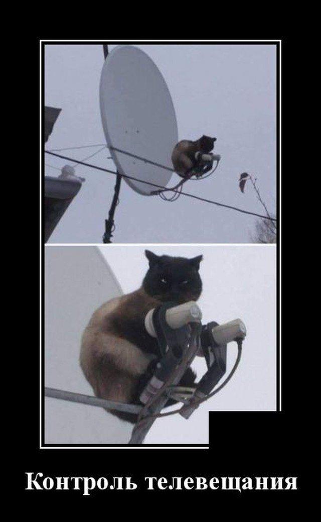 Демотиватор про телевидение