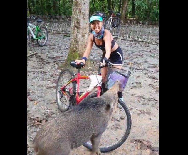 Кабан напал на велосипедисток