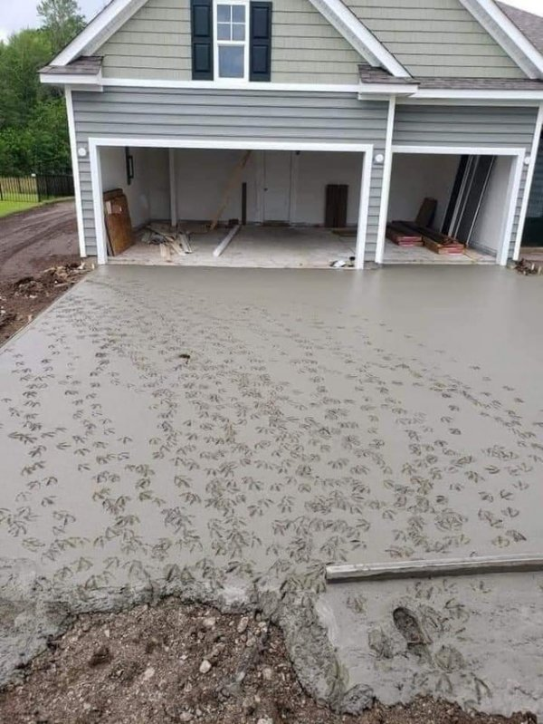 Залили бетон возле гаража, а местные утки решили погулять