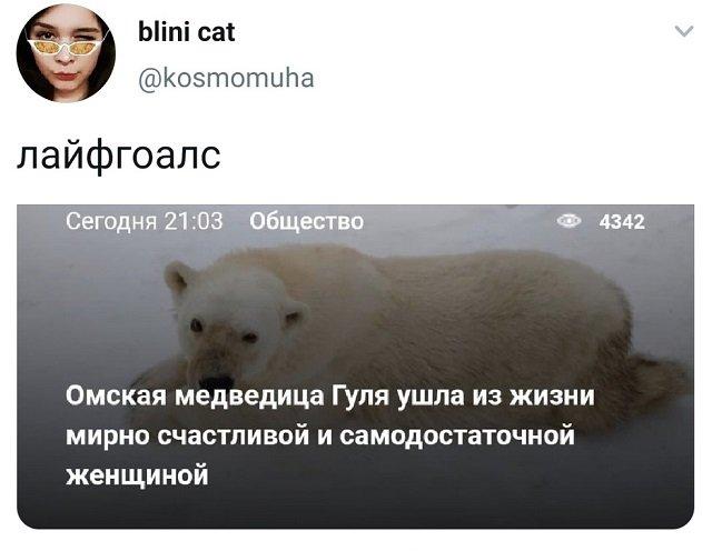 твит про медведицу