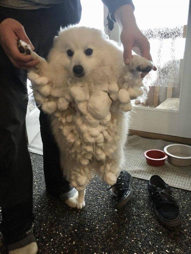 Собака и снег на шерсти