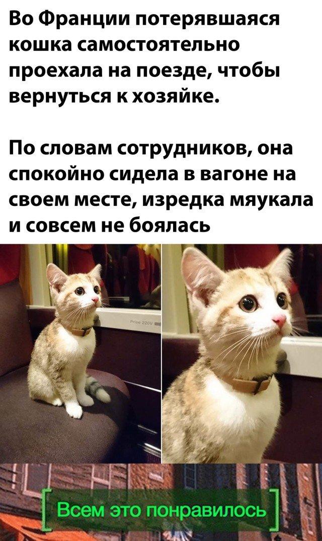 Потерявшийся кот