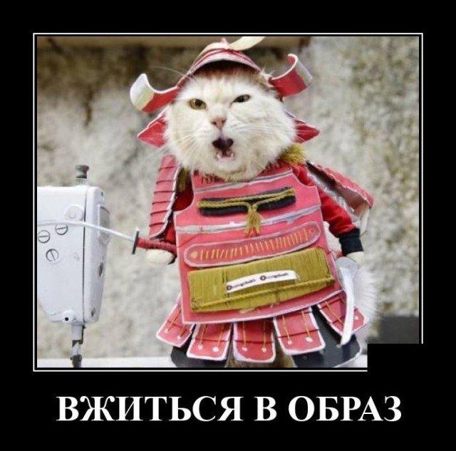 Демотиватор про кота-самурая
