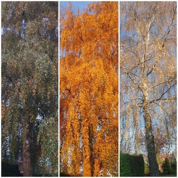 Как менялось дерево в саду на протяжении месяца