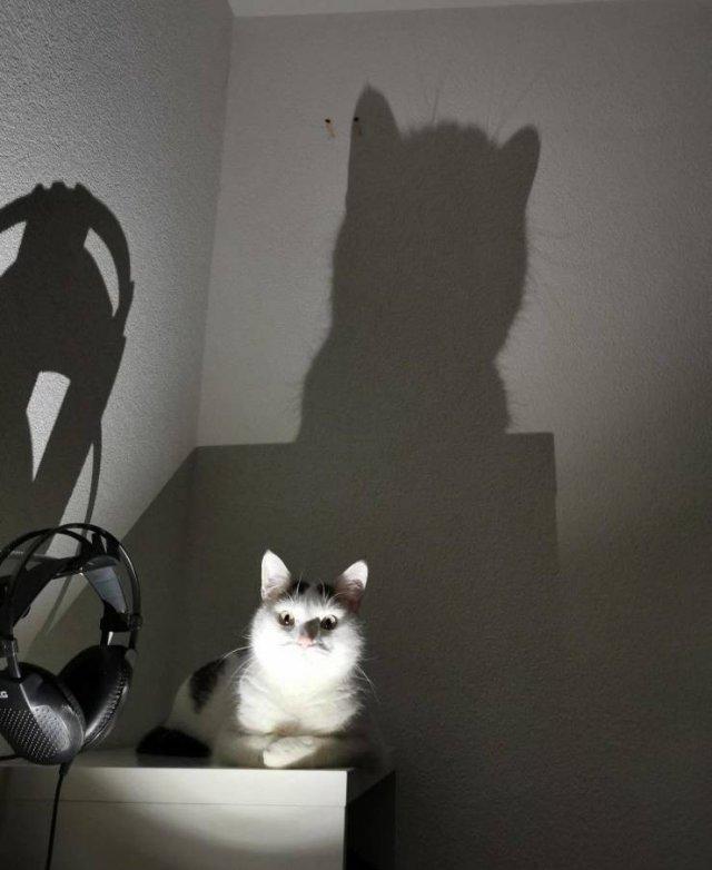 Кот-Бэтмен