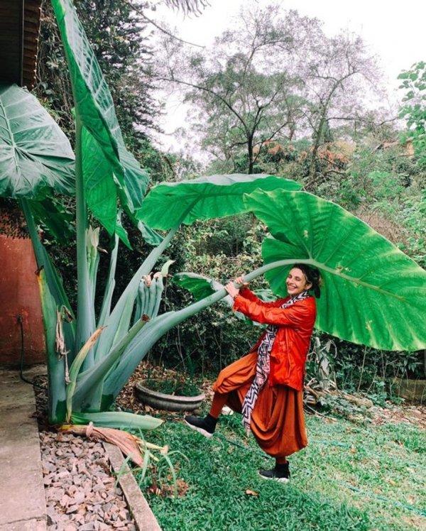 Гигантский лист маланги