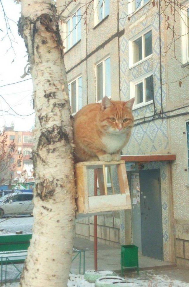 Кот сидит на скворечнике
