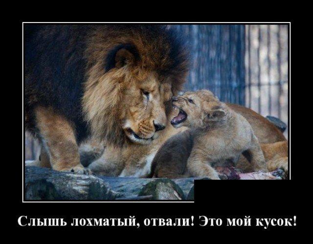205194_12_trinixy_ru.jpg
