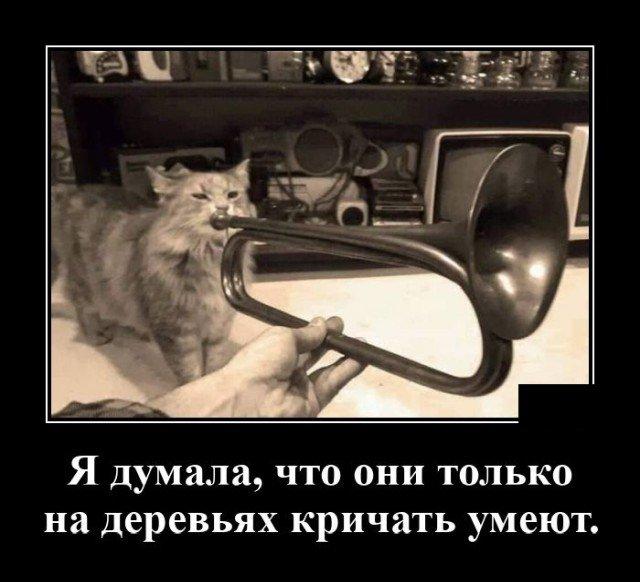 205194_13_trinixy_ru.jpg