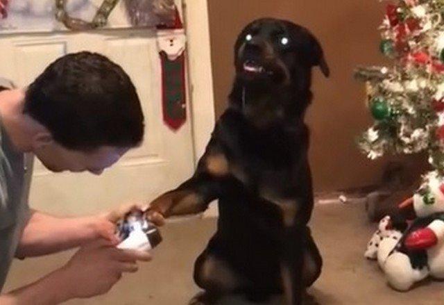 Собачий маникюр таит в себе большую опасность