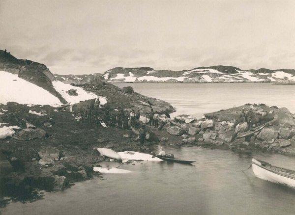 Китобои вытаскивают улов на берег недалеко от Нуука. 1889 г.