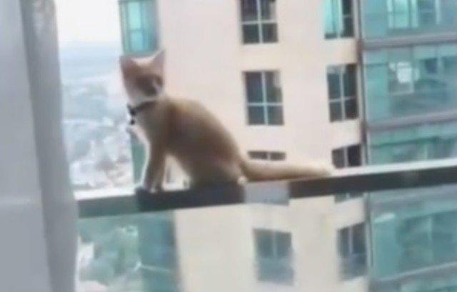 Кот, чуть не поплатился за то, что гуляет сам по себе
