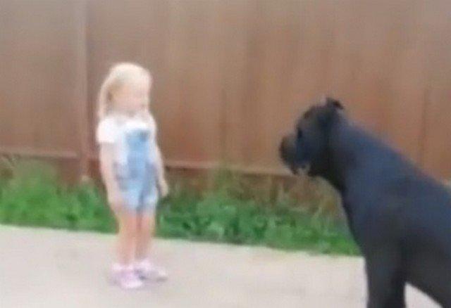 Собака, которая могла сожрать девочку, но подчинилась ей