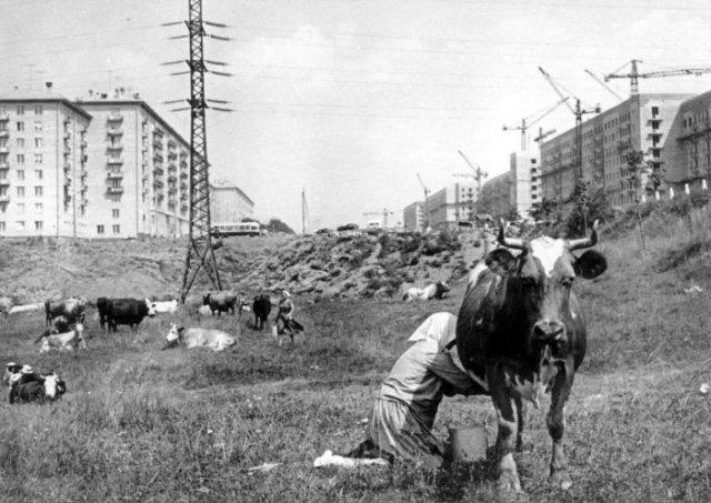 Ленинский проспект, 1959 год, Москва