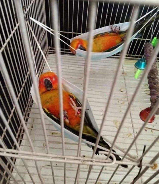 Спящие попугаи