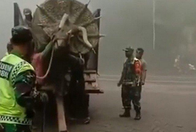 В лесопарке Индонезии был замечен трицератопс