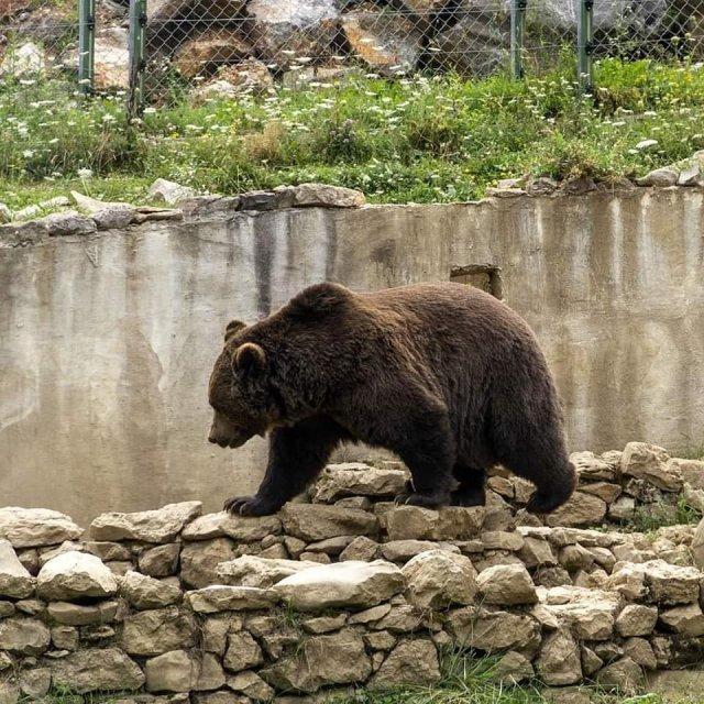 Медвежий приют в деревне Кутерево