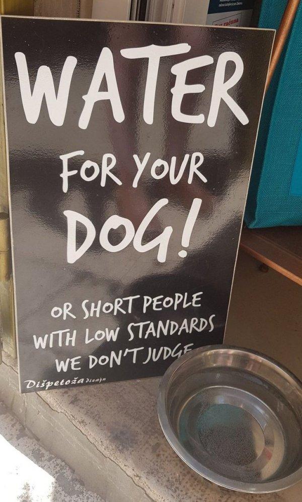 Вода для вашей собаки!