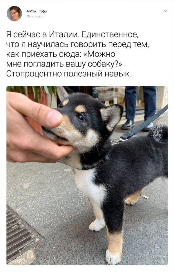 твит про собаку