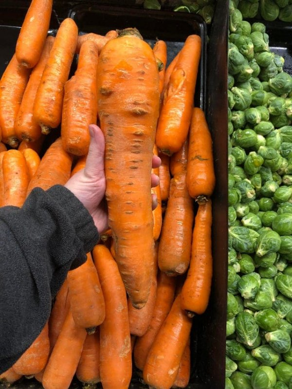 """Если заточить эту """"морковищу"""", можно использовать ее в качестве оружия"""