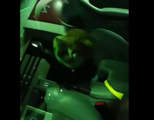 Кот заблокировал двери BMW