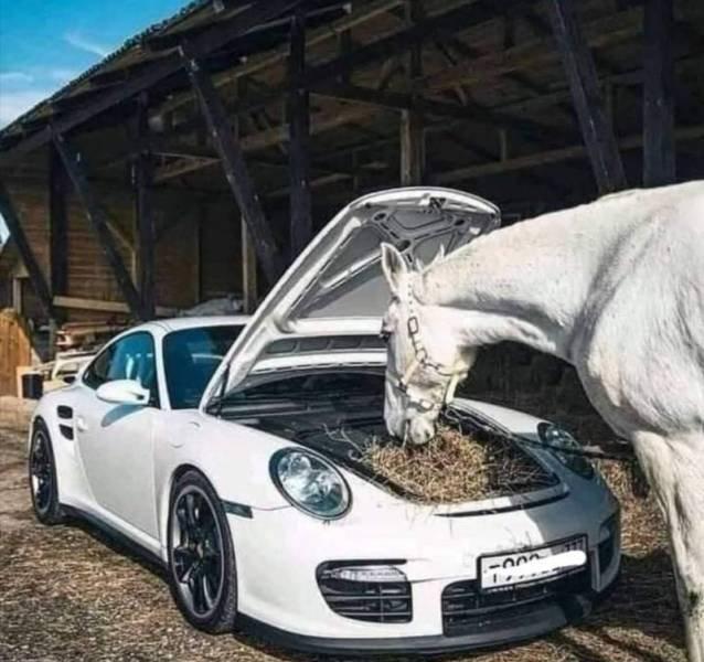 Porsche и лошадь