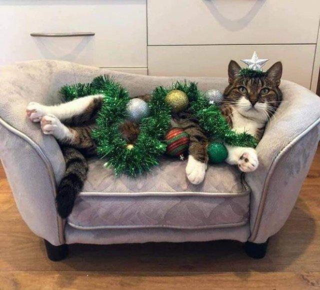Кот готов к Новому году