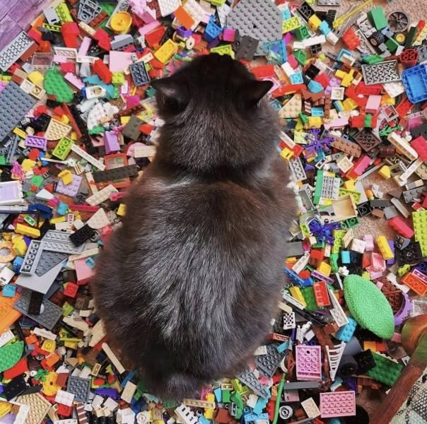 Кот лежит на LEGO