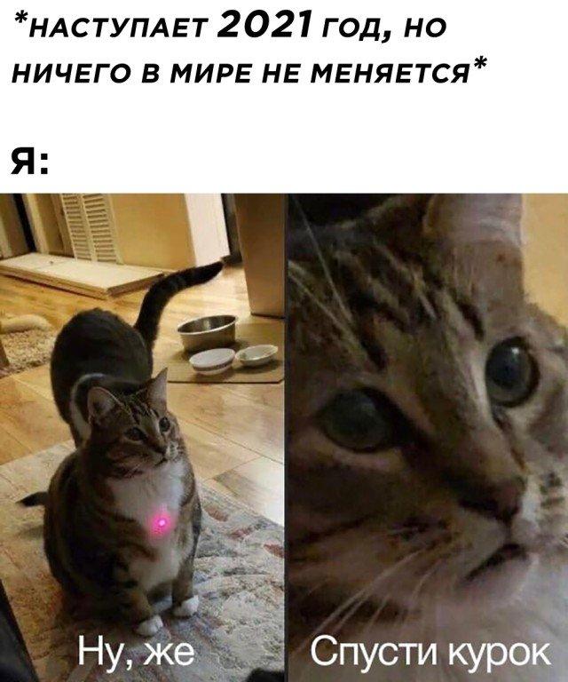 Кот и лазерная указка