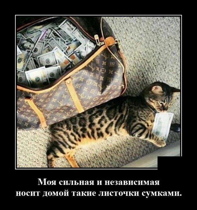 Демотиватор про кота и хозяйку